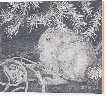 Mountain Cottontail Wood Print by Shevin Childers