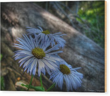 Mountain Daisies And A Downed Spruce Wood Print
