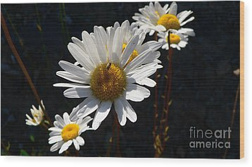 Wood Print featuring the photograph Mountain Daisy by Larry Keahey