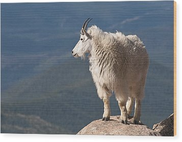 Wood Print featuring the photograph Mountain Goat by Gary Lengyel