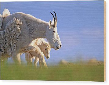 Wood Print featuring the photograph Mountain Goat Light by Scott Mahon