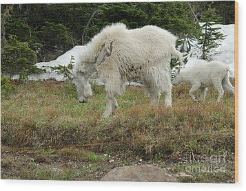 Mountain Goat Mom And Baby II Wood Print by D Nigon