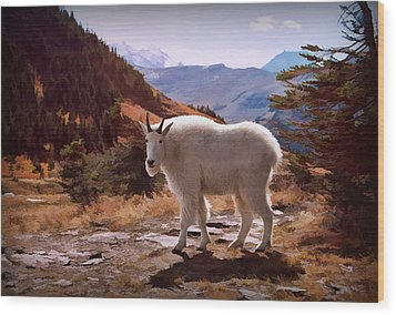 Mountain Goat Wood Print by Patricia Montgomery