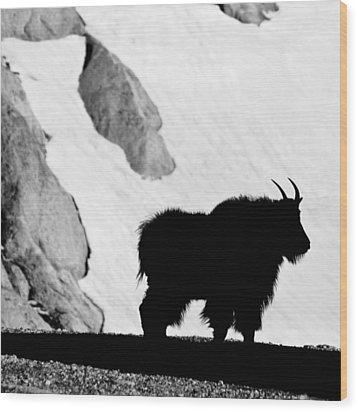 Mountain Goat Shadow Wood Print