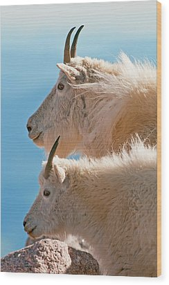 Wood Print featuring the photograph Mountain Goats by Gary Lengyel