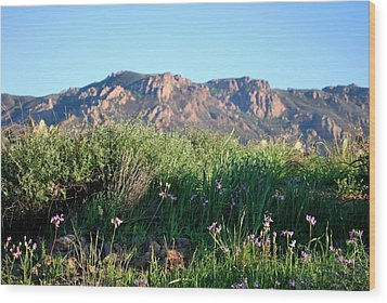 Wood Print featuring the photograph Mountain Landscape View - Purple Flowers by Matt Harang
