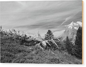 Mountain Landscape With Fallen Tree And View At Alps In Switzerland Wood Print