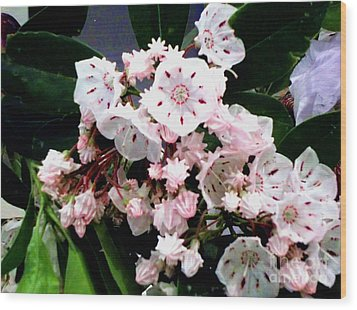 Wood Print featuring the painting Mountain Laurel  by Donna Dixon