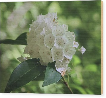Wood Print featuring the photograph Mountain Laurel - Spring by Nikolyn McDonald