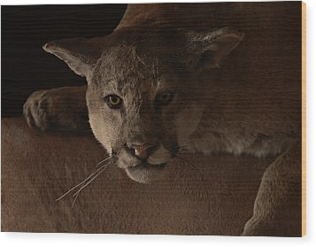 Mountain Lion A Large Graceful Cat Wood Print by Christine Till