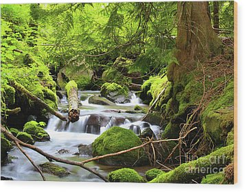 Mountain Stream In The Pacific Northwest Wood Print