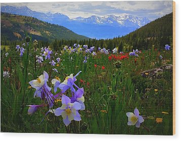 Mountain Wildflowers Wood Print by Karen Shackles
