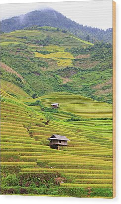 Mountainous Rice Field Wood Print by Akari Photography