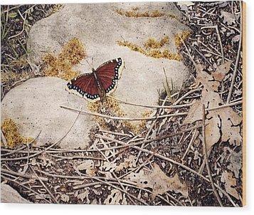 Mourning Cloak Wood Print by Conrad Mieschke
