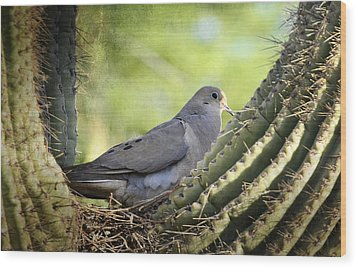 Mourning Dove In The Morning  Wood Print by Saija  Lehtonen
