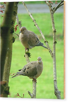 Mourning Doves Wood Print by Lisa Rose Musselwhite