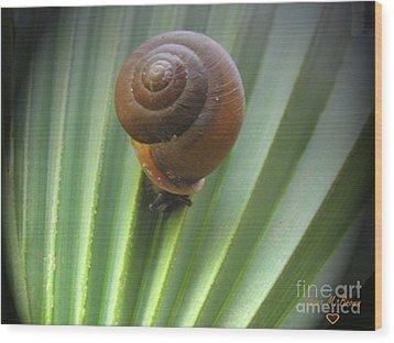 Wood Print featuring the photograph Moving Slow by Donna Brown