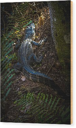 Mr Alley Gator Wood Print by Marvin Spates