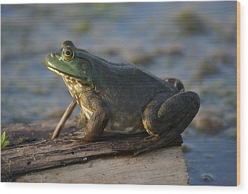 Mr. Bullfrog Wood Print by Heidi Poulin
