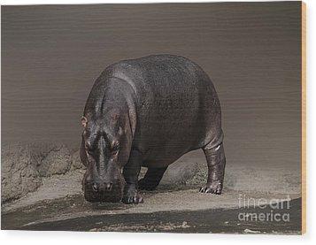 Mr. Hippo Wood Print