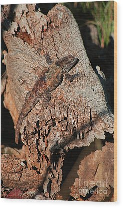 Wood Print featuring the photograph Mr. Lizard - Tucson Arizona by Donna Greene