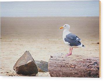 Mr. Seagull Wood Print