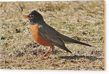 Wood Print featuring the photograph Mr. Spring Robin by Al Fritz