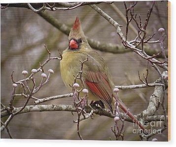 Wood Print featuring the photograph Mrs Cardinal by Douglas Stucky
