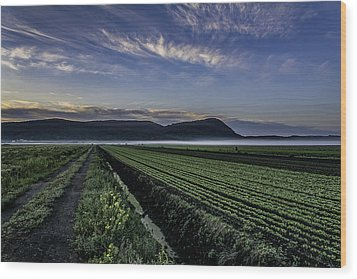 Dawn And Fog Over The Farmland Wood Print