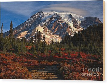 Mt. Rainier Paradise Morning Wood Print by Adam Jewell