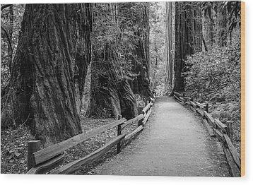 Muir Woods Wood Print by Radek Hofman