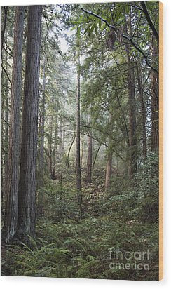 Wood Print featuring the photograph Muir Woods Tranquility by Sandra Bronstein