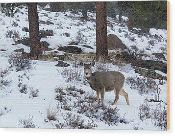 Mule Deer - 8922 Wood Print