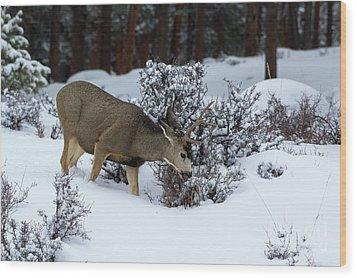 Mule Deer - 9130 Wood Print