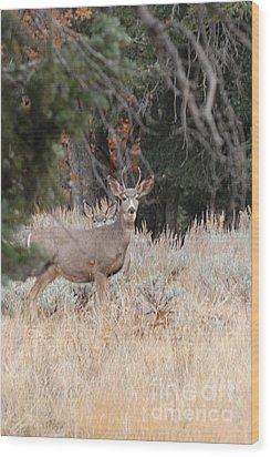 Mule Deer Buck Wood Print by Dennis Hammer