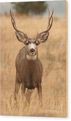 Wood Print featuring the photograph Mule Deer Buck Showing His Thoughts by Max Allen