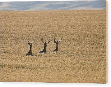 Mule Deer In Wheat Field Wood Print by Mark Duffy