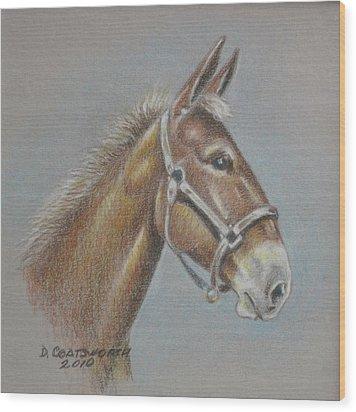 Mule Head Wood Print by Dorothy Coatsworth