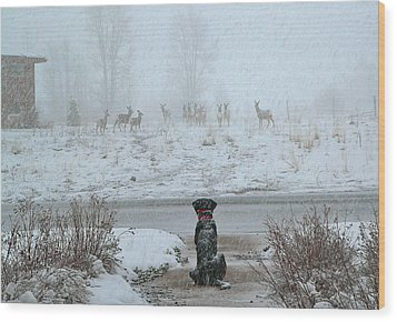 Murphy Watches The Deer Wood Print by Eric Tressler