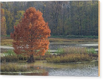Wood Print featuring the photograph Muscatatuck - D009967 by Daniel Dempster