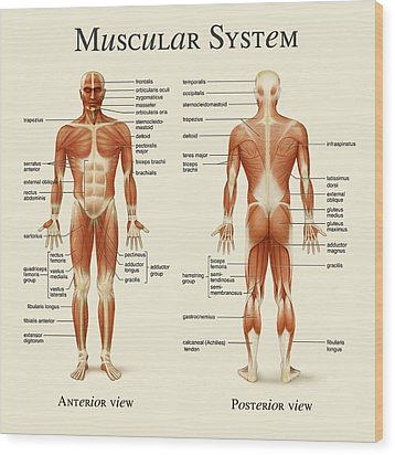 Wood Print featuring the photograph Muscular System by Gina Dsgn