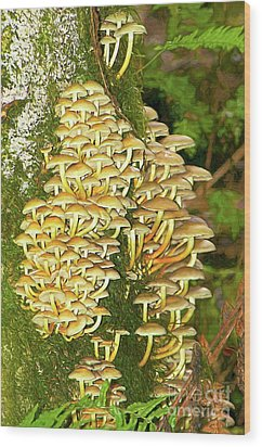 Wood Print featuring the photograph Mushroom Colony Photo Art by Sharon Talson