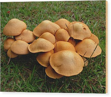 Wood Print featuring the photograph Mushroom Gathering by Jeanne Kay Juhos