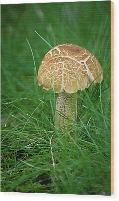 Mushroom In The Grass Wood Print by Teresa Mucha