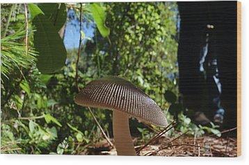Wood Print featuring the photograph Mushroom by Matthew Bamberg
