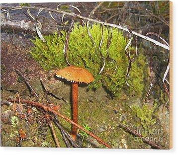 Mushroom Microcosm Wood Print by Jim Thomson