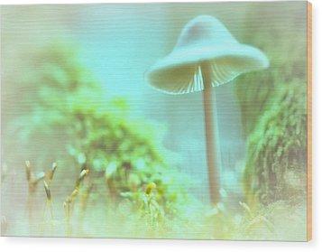 Wood Print featuring the photograph Mushroom Misty Dreams, Mycena Galericulata by Dirk Ercken