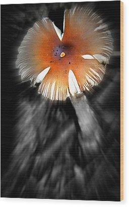 Mushroom Wood Print by Rick DiGiammarino