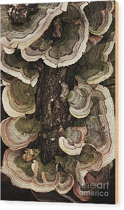 Wood Print featuring the photograph Mushroom Shells By The Lake Shore by Kim Henderson