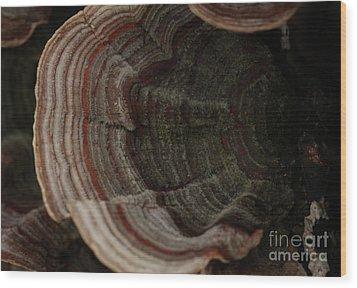 Wood Print featuring the photograph Mushroom Shells by Kim Henderson